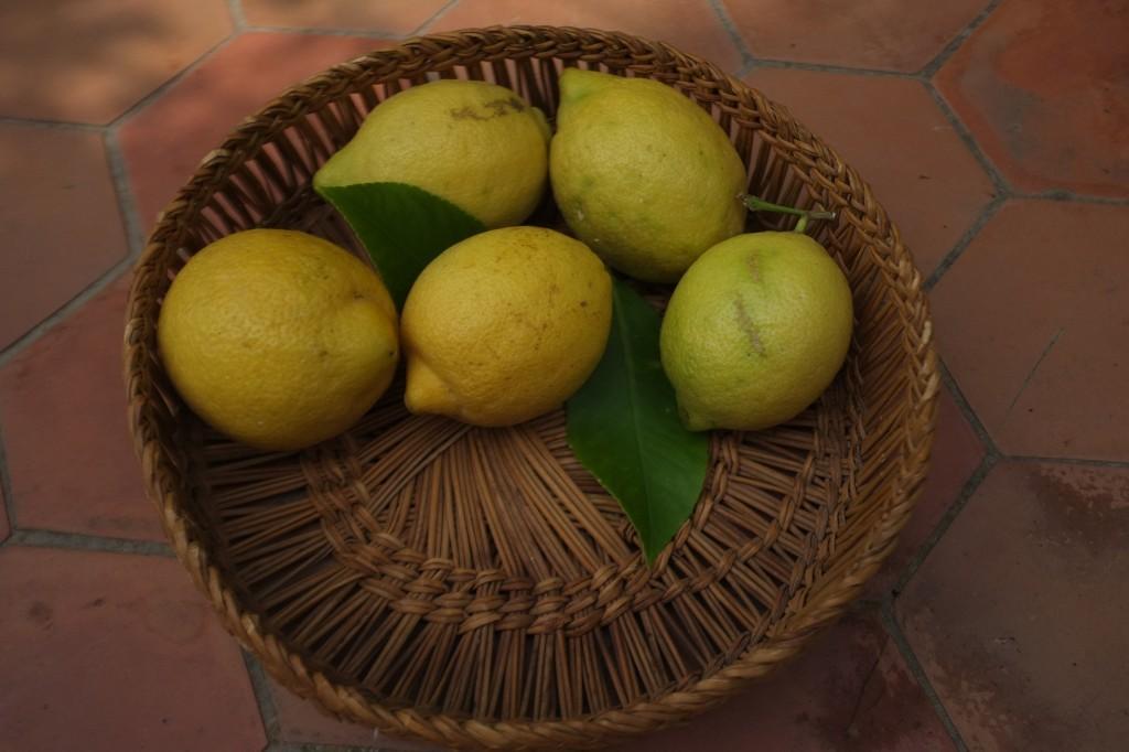 """Ma récolte """"local & Bio"""" des citrons du jardin"""